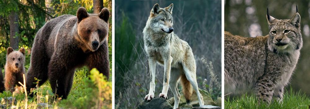 Bär_Wolf_Luchs